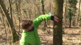 Gestió forestal per superar el canvi climàtic