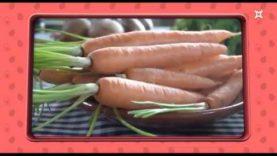 1món.cat – Com incloure la verdura en el menú dels infants?
