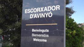 Augmenten a 11 els positius per Covid-19 a l'escorxador d'Avinyó